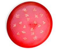 Ecola GX53   LED color  8,0W Tablet 220V Red Красный матовое стекло (композит) 28x74 Истра